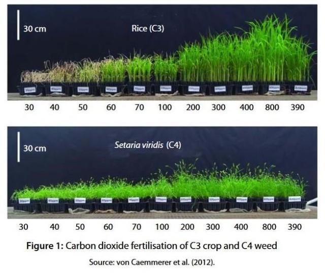 Koldioxidgödning Ris