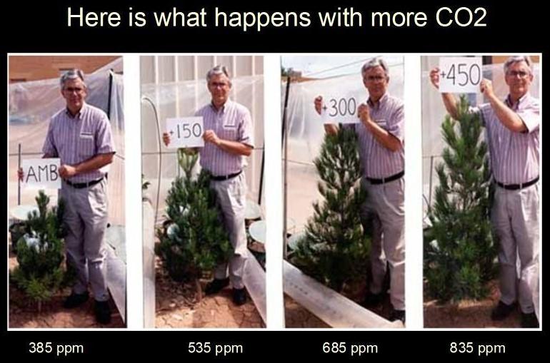 Koldioxidgödning Tall